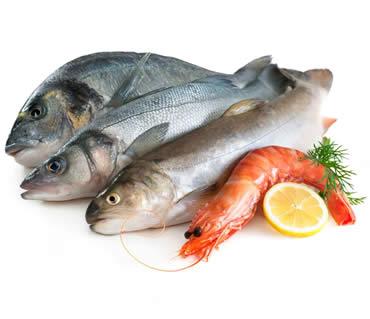 refrigeracion-camara-pescado-2